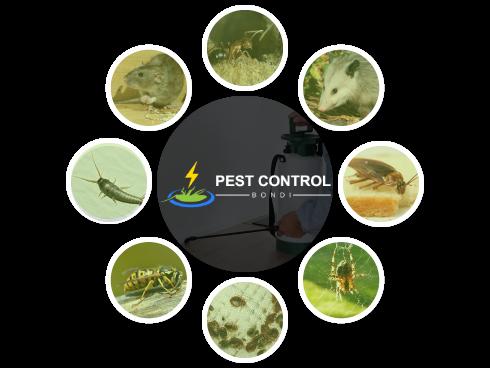 Pest Control Bondi