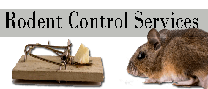 Professionals Rodents Control Services