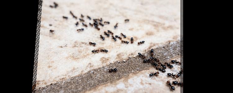 Ant Control Bondi