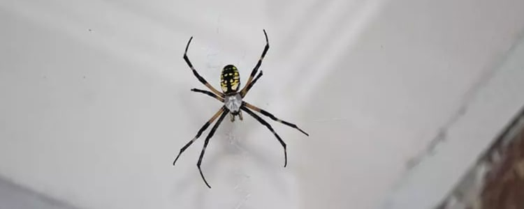 spider control bondi